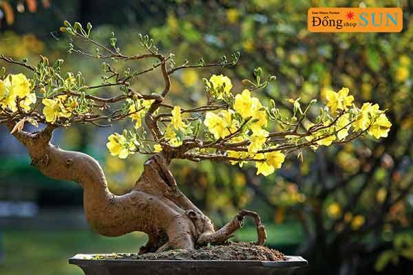 Loài cây tượng trưng cho ngày Tết Nguyên Đán